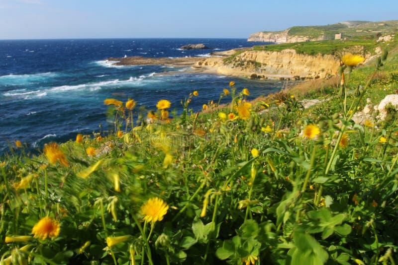 Windy Coast Stock Images