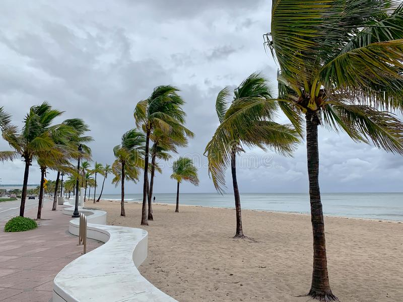 Windy condition on Fort Lauderdale Beach. Palm trees sway on Fort Lauderdale Beach as a tropical storm watch is in effect as Hurricane Dorian passes the east stock image