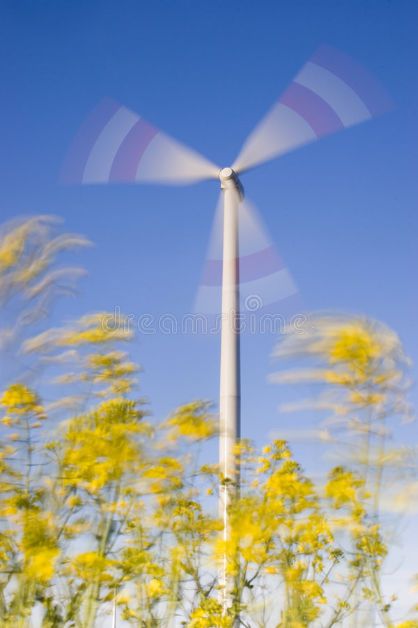 Windy day royalty free stock photography