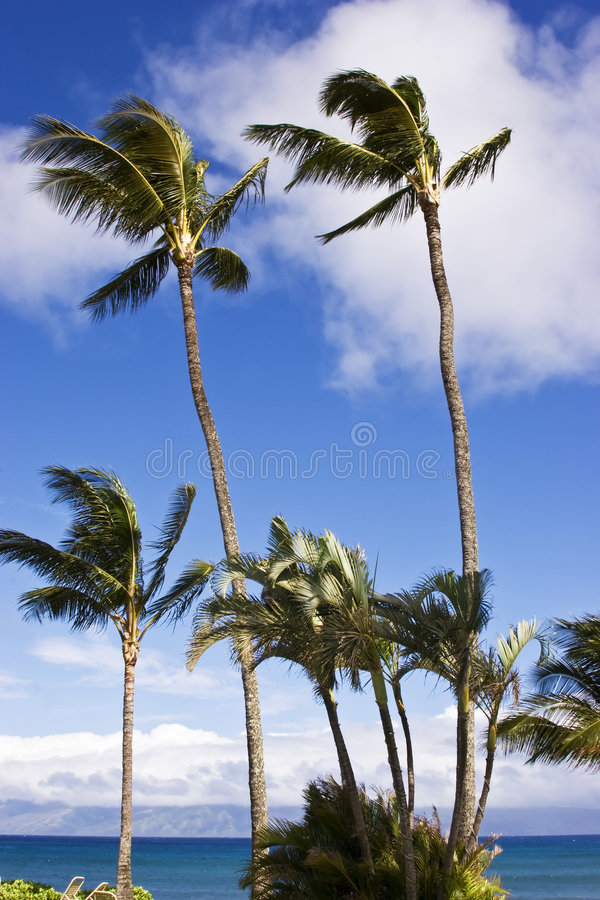 Download Windy Day stock image. Image of nature, ocean, fantasy - 8286699