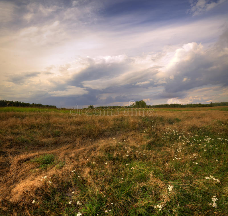 Windy field stock images
