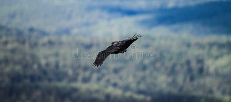 Windy Hunting 2 lizenzfreie stockfotos