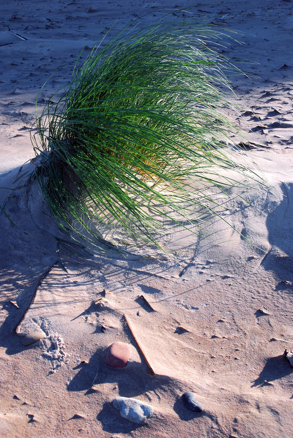 Windy morning. A view of dunes sand, grass and shadows in morning sun royalty free stock photo