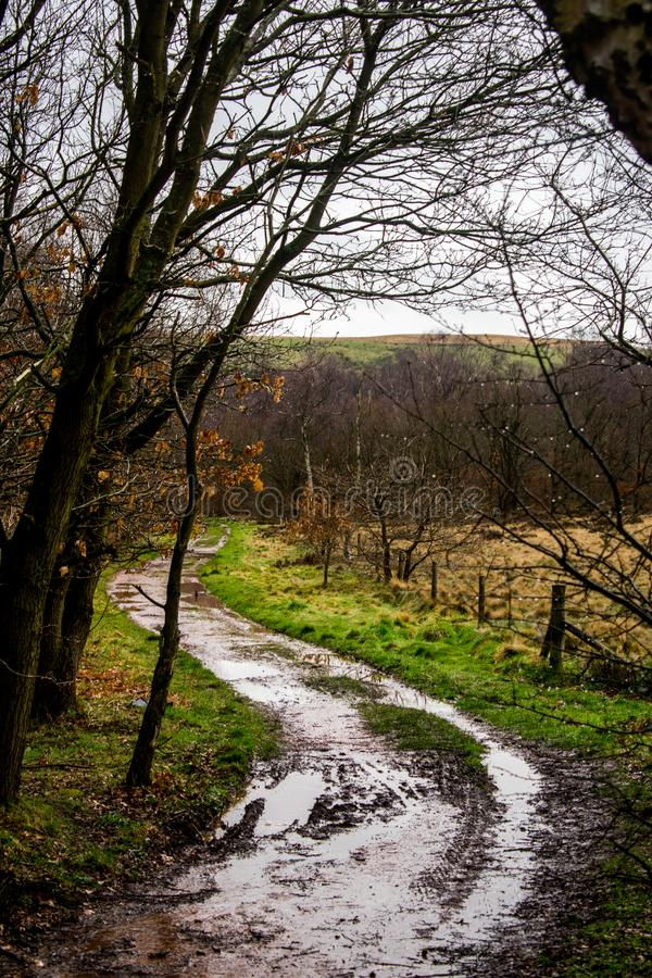 A windy, muddy pathway leading though a forest royalty free stock photography