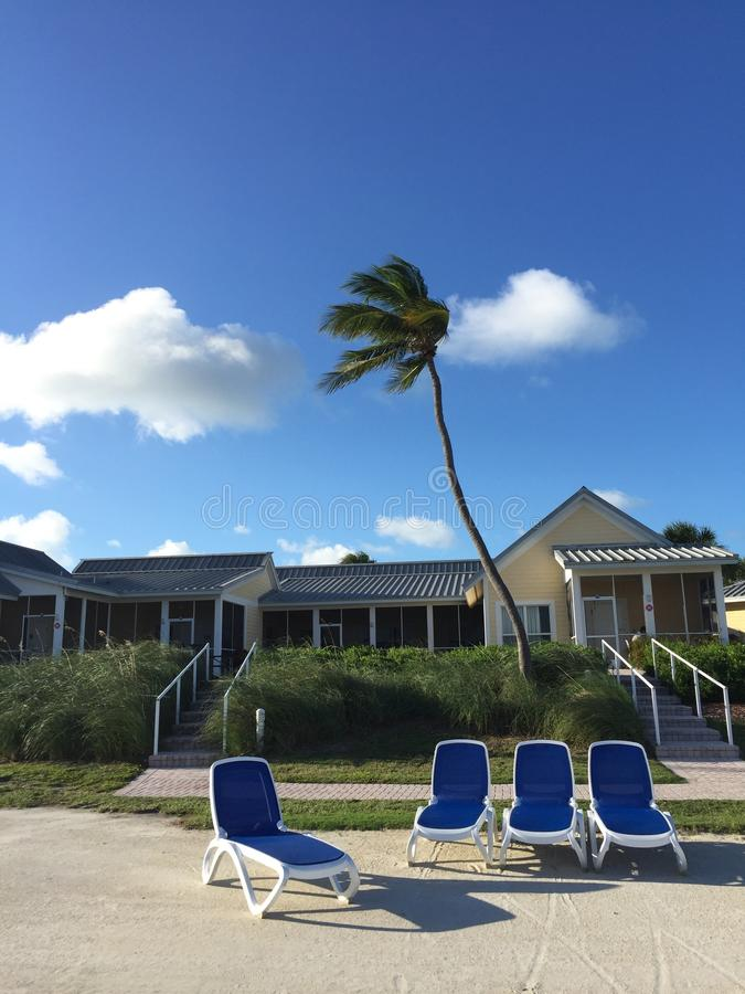 Windy palm tree stock image