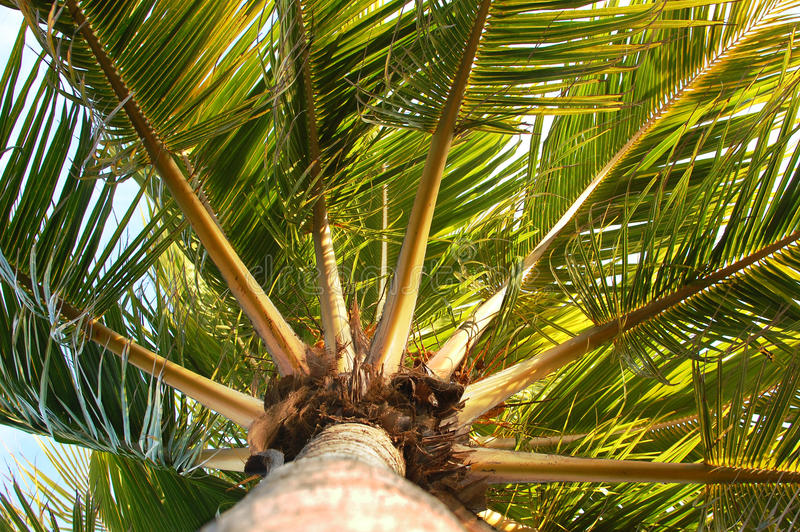 Windy Palm Tree royalty free stock images