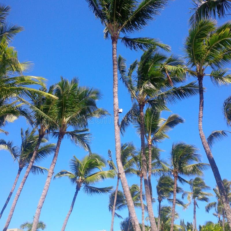 Windy Palms foto de stock