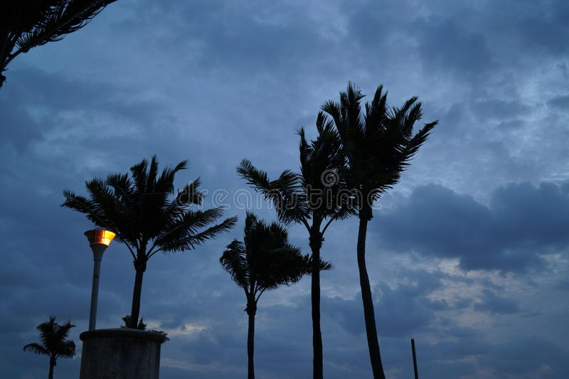 Windy Palms lizenzfreies stockbild