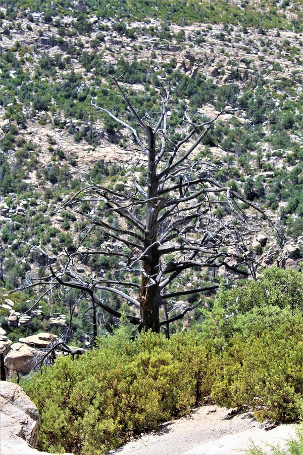 Windy Point Vista, Berg Lemmon, Santa Catalina Mountains, Lincoln National Forest, Tucson, Arizona, Vereinigte Staaten stockfotos