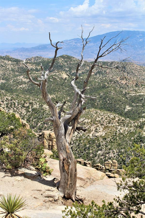 Windy Point Vista, Berg Lemmon, Santa Catalina Mountains, Lincoln National Forest, Tucson, Arizona, Vereinigte Staaten lizenzfreie stockbilder