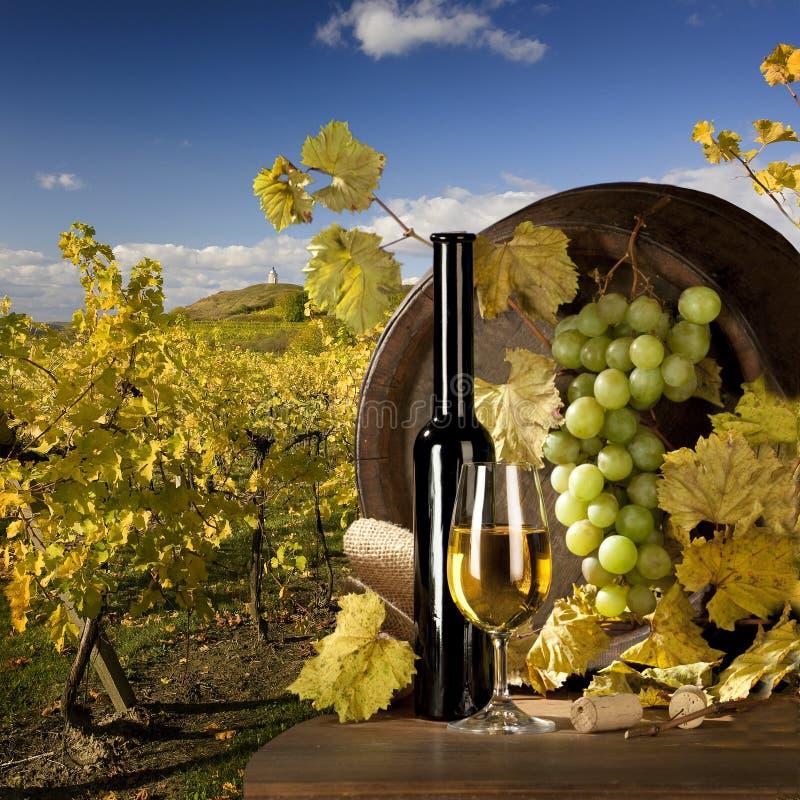 Free Wine Royalty Free Stock Photo - 11731915