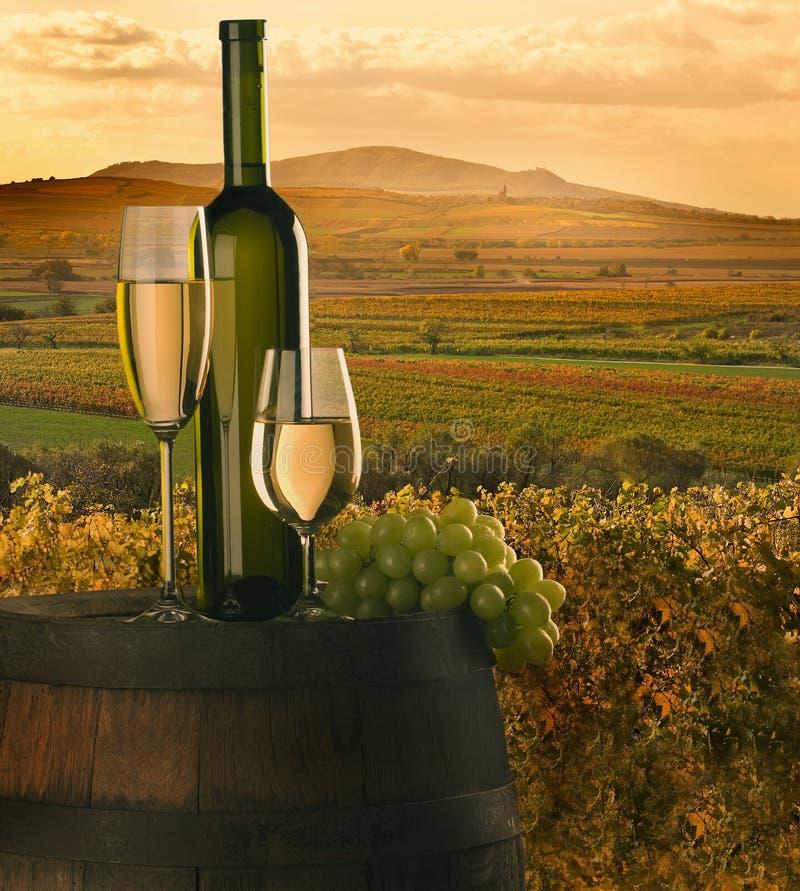 The wine stock photos