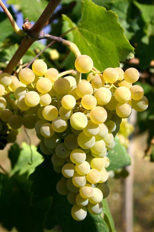 Free Wine And Around It Royalty Free Stock Photos - 4868878