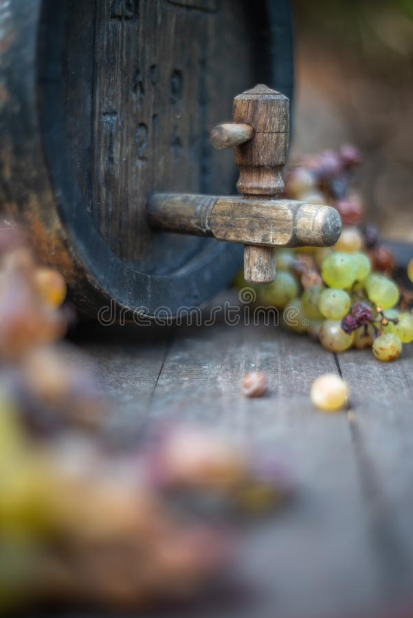 Wine barrel with white grapes on harvest season. Wine barrel with white wine grapes on harvest season in Hungary royalty free stock images