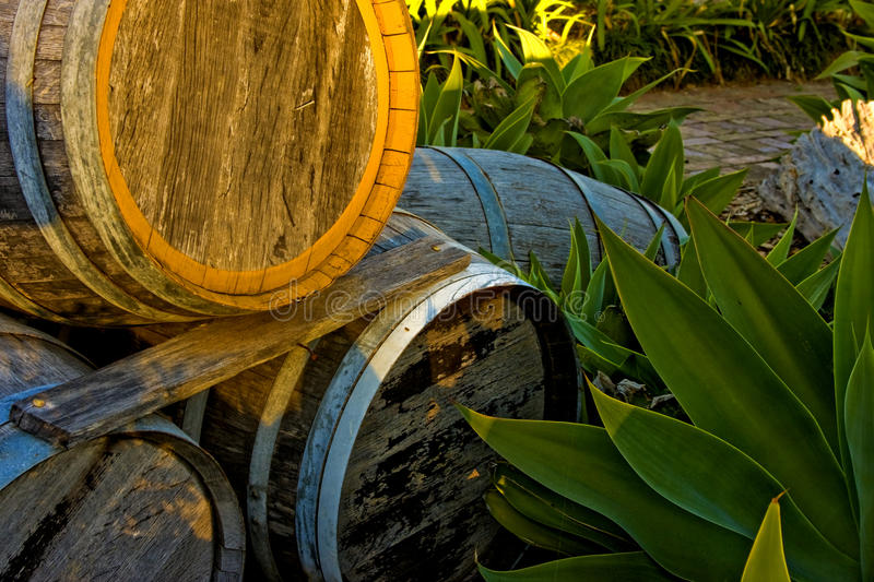 Wine Barrels. Small stockpile of wine barrels bathed in late afternoon light at a boutique winery, promoting an age old tradition stock photo