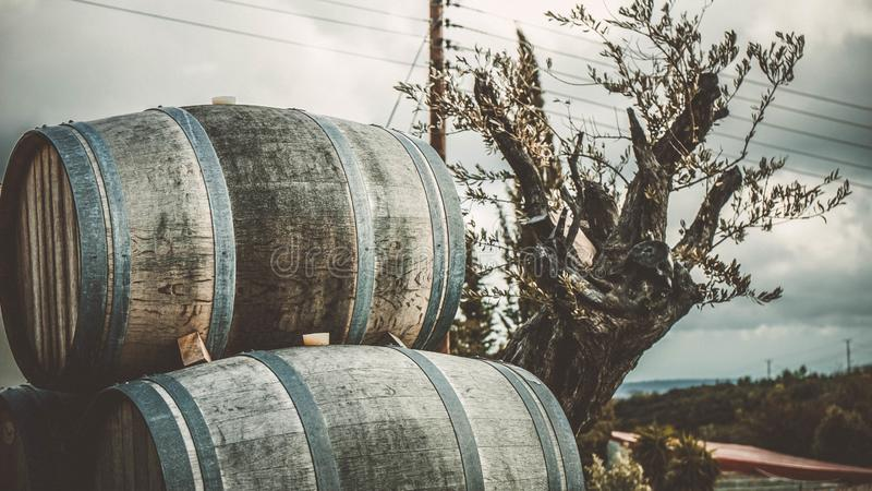 Wine barrels for about plant in Cyprus Europe royalty free stock photo