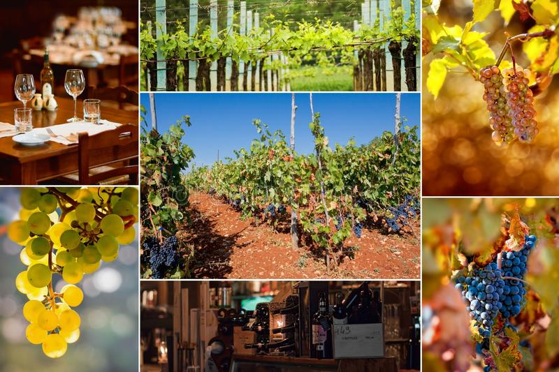 Wine.Beautiful Trauben-Collage stockfotografie