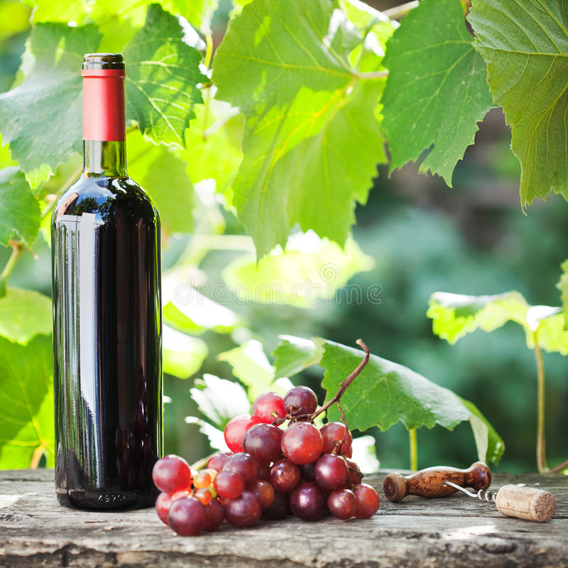 Download Wine Bottle And Bunch Of Grapes Stock Photo - Image: 22776360