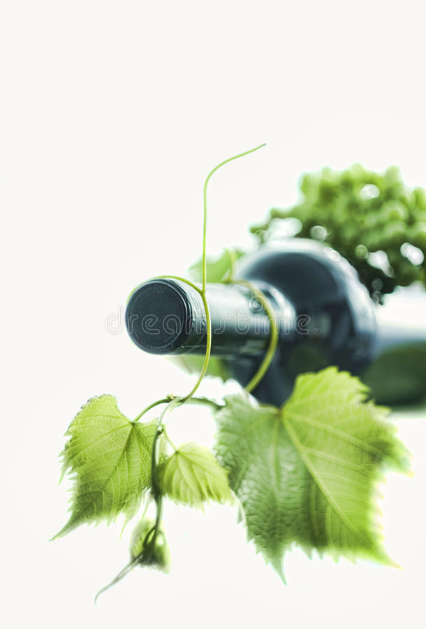 Wine Bottle With Green Leaf Royalty Free Stock Photo