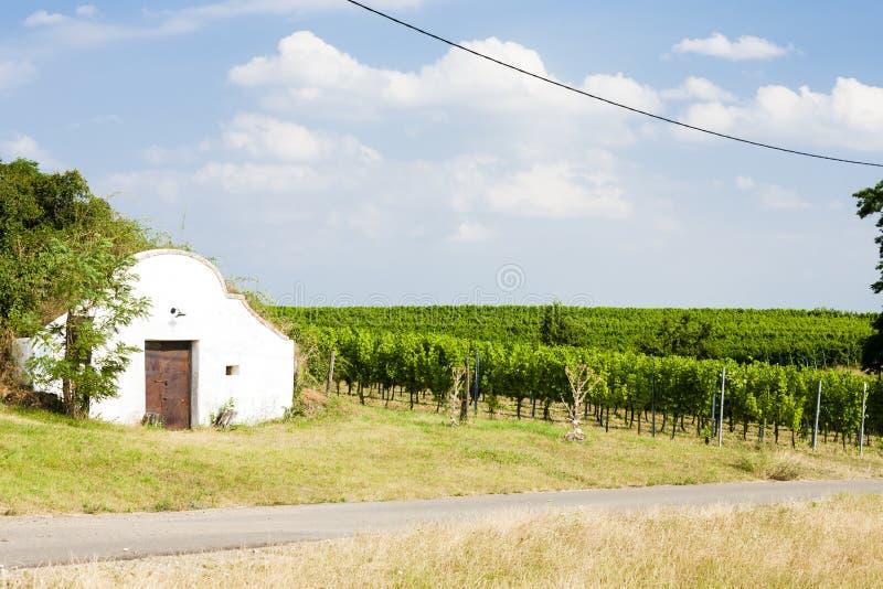 Wine cellar with vineyard, Novy Prerov, Czech Republic stock image
