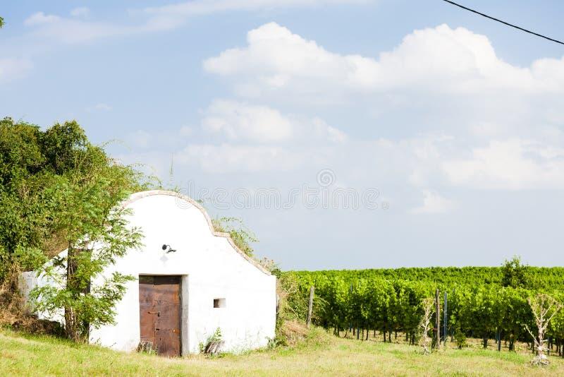 Wine cellar with vineyard, Novy Prerov, Czech Republic stock images