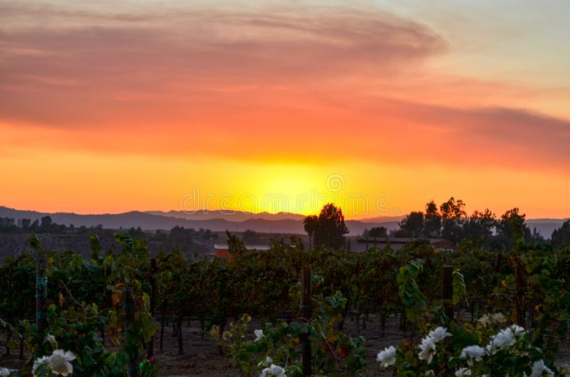 Wine Country Temecula Southern California stock photography