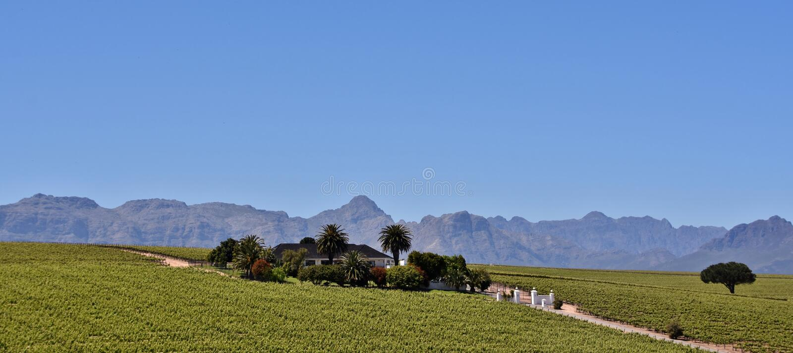 Wine Farm and Hottentots Holland Mountains. Landscape with Wine Farm and Hottentots Holland Mountains stock photography