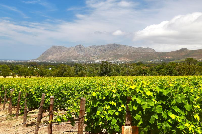 The Wine Farms in cape town , south africa royalty free stock images