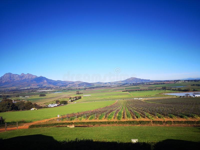 Wine farms. Smacap_Bright, nature, beatiful, sunny royalty free stock image