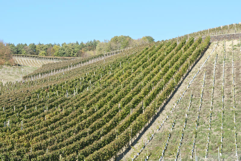 Download Wine Field stock image. Image of wine, blue, sunny, rheinlad - 28766883
