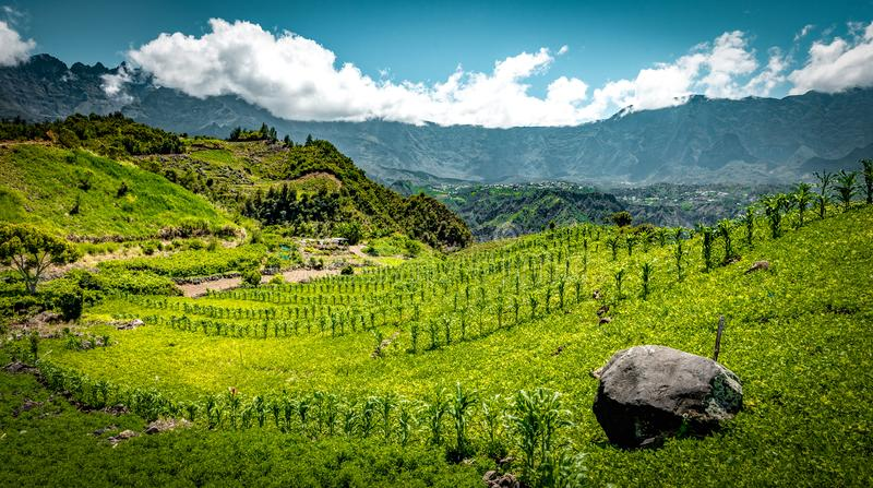 Wine fields of Cirque de Salazie stock image