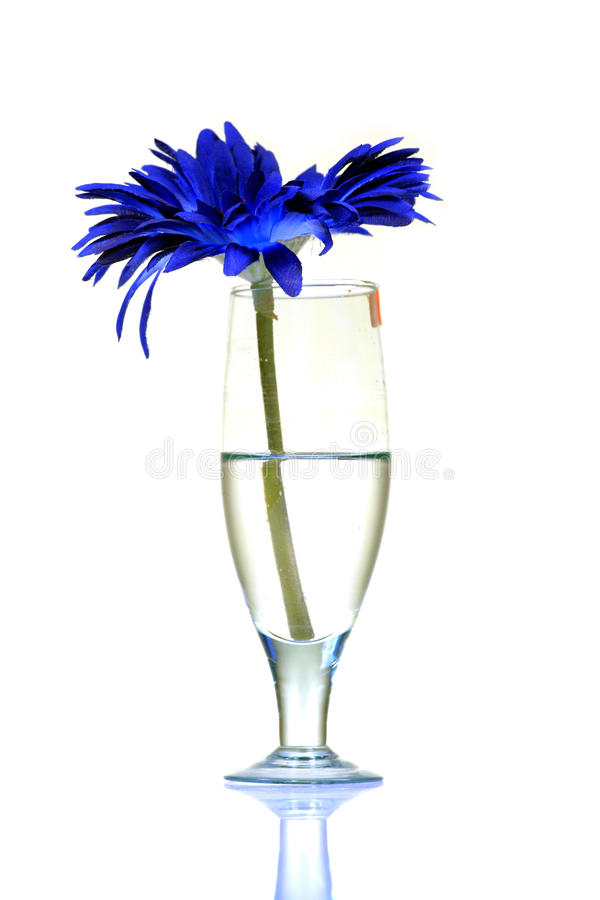 Wine and flower. Half filled white wine glass with gerbera flower isolated on white background royalty free stock images