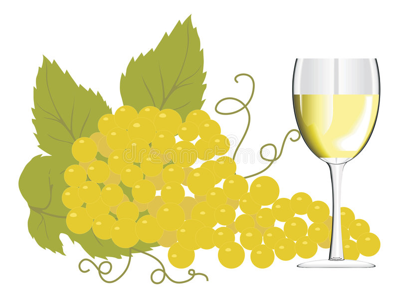 Wine glass with a bunch of grapes vector illustration