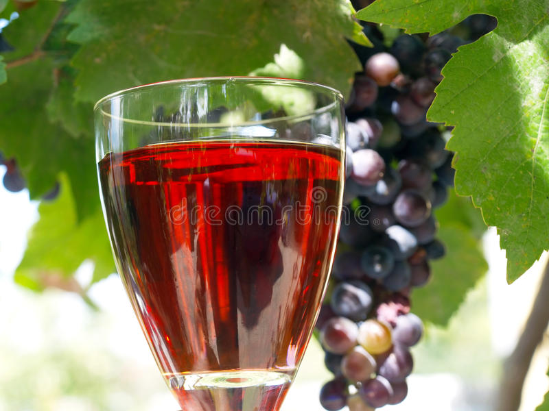 Wine Grapes royalty free stock image