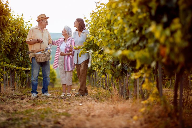 Wine and grapes. Family tradition. family working at winemaker vineyard royalty free stock image