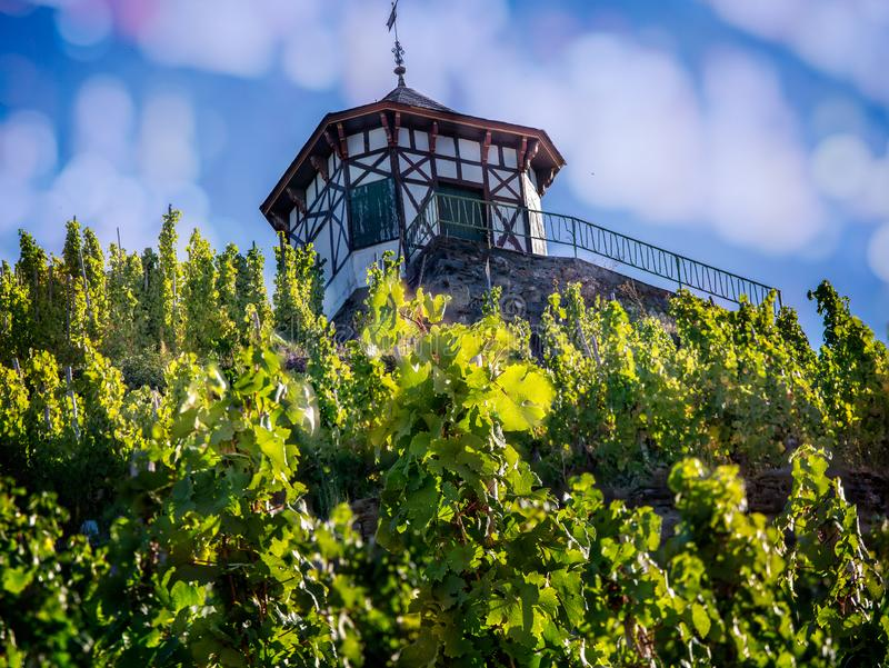 Wine growers field house next to field of grape vines in Bernkastel,. Germany stock images