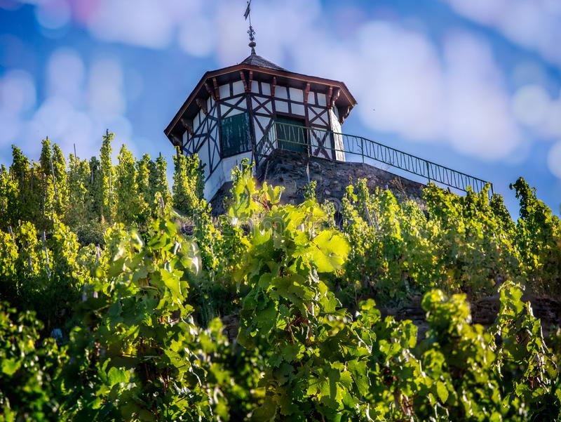 Wine growers field house next to field of grape vines in Bernkastel. Germany royalty free stock photography