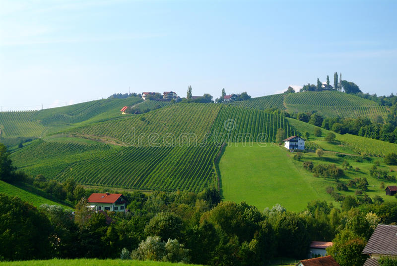 Wine hill styria. Vineyard wine south styria hill green royalty free stock photo