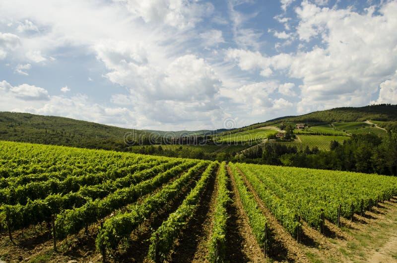 Wine la région en Italie, Toscane de grands fabricants image libre de droits