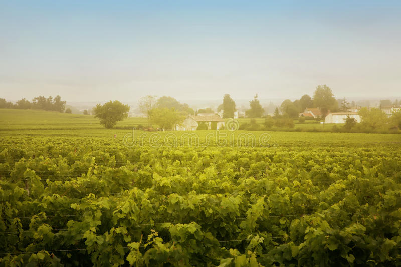 Wine landscape stock photos
