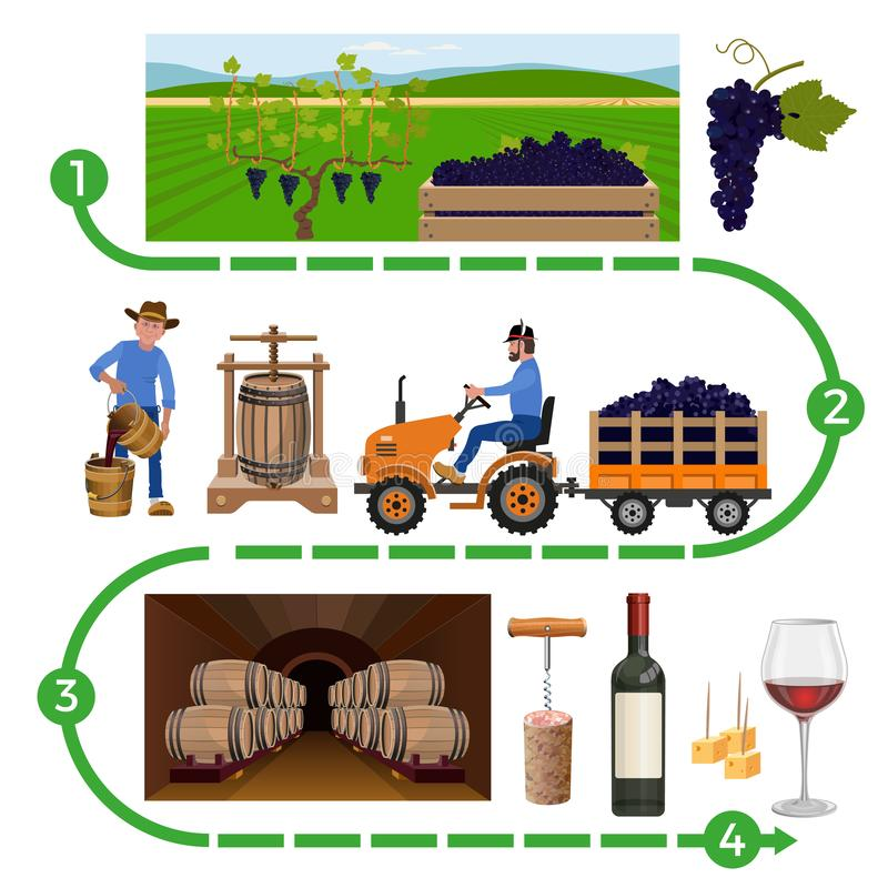 Wine making process. Vector illustration isolated on white background vector illustration