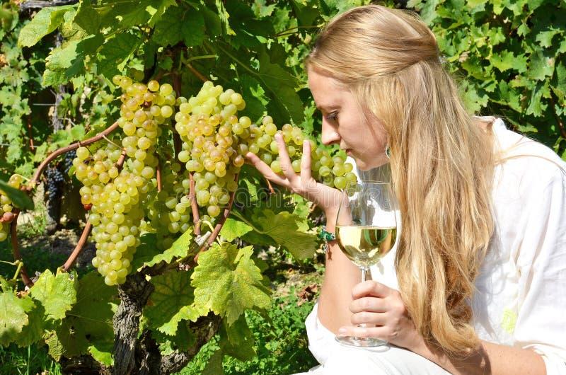 Wine och druvor fotografering för bildbyråer