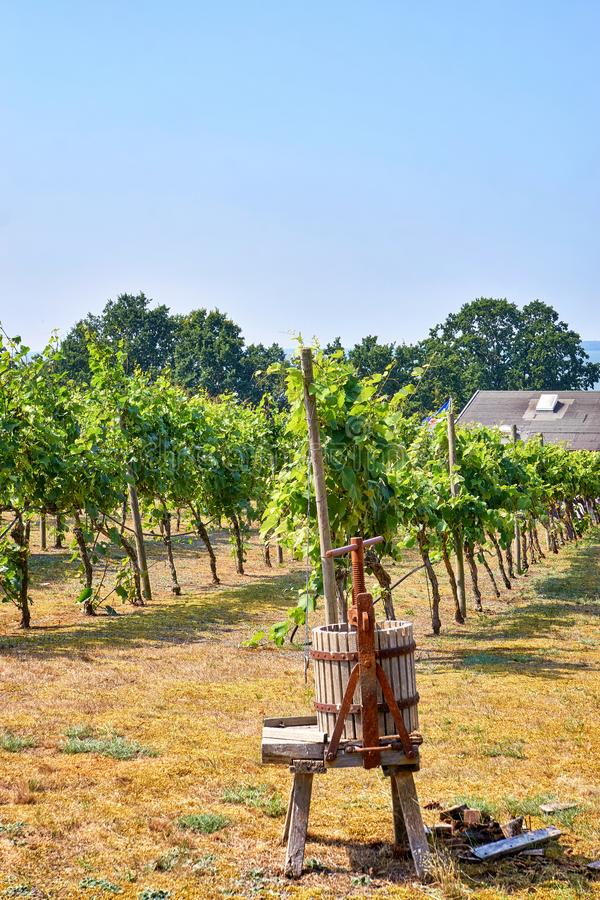 Wine press on a vineyard in Loddin. Usedom Island on the Baltic Sea stock images