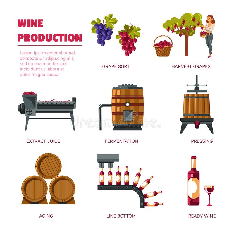 Wine production grape harvest extract juice and fermentation. Winery and wine production grape harvest extract juice and fermentation vector pressing aging and royalty free illustration