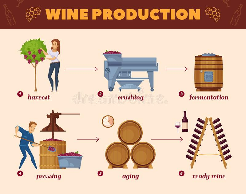 Wine Production Process Cartoon Flowchart. Winery production cartoon flowchart from grape harvesting to wine bottles rack infographic elements composition poster vector illustration