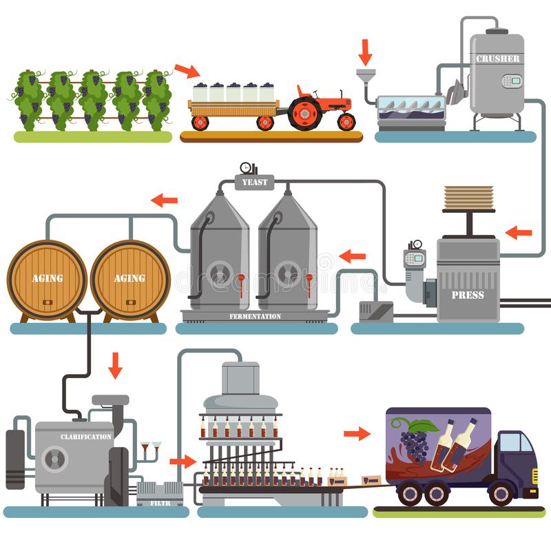 Wine production process, production beverage from grape flat vector Illustrations vector illustration
