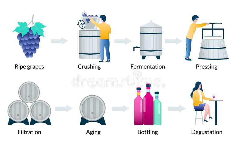 Steps of wine production process, vector infographics stock illustration