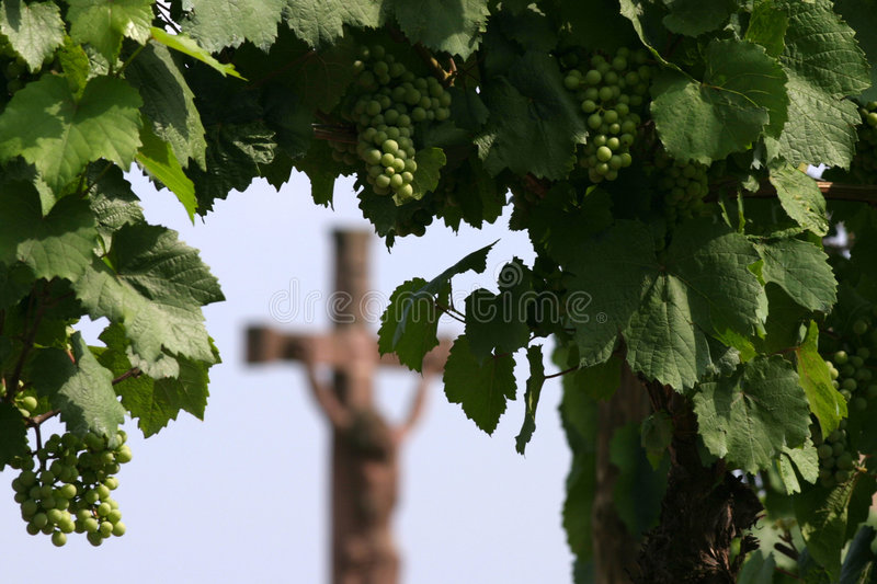 Download Wine is religion stock image. Image of italy, jesus, district - 1307205