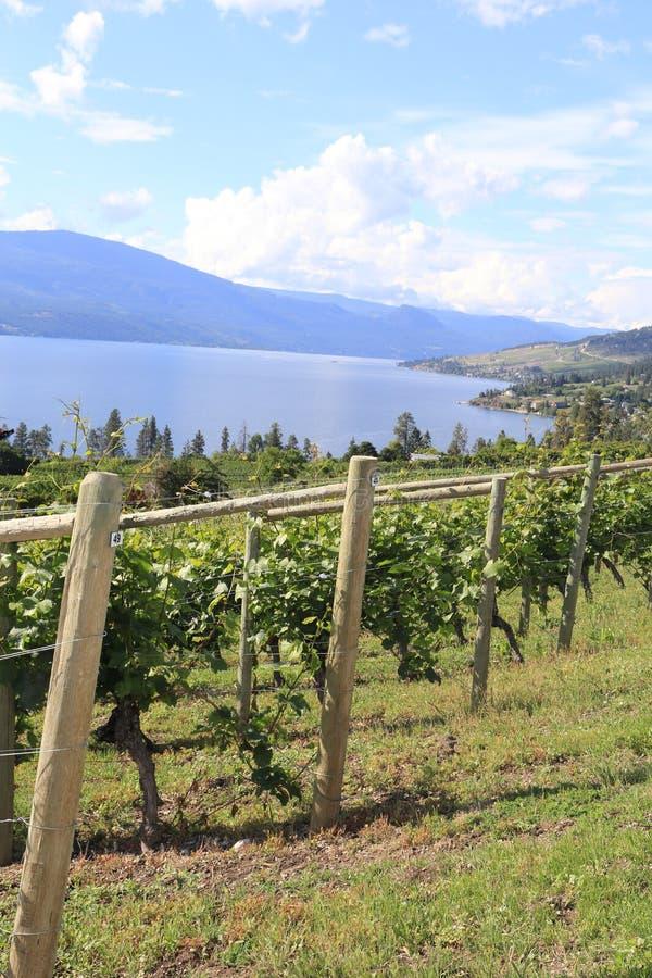 Free Wine Resorts-California Of Canada Okanagan Valley Stock Photo - 96858760