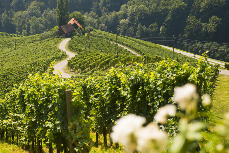 Wine road in a shape of a heart, Maribor, Slovenia. Wine road in a shape of a heart near Maribor town in Slovenia royalty free stock photo